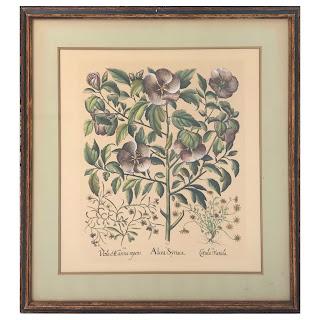 Basilius Besler Hollyhock Botanical Etching